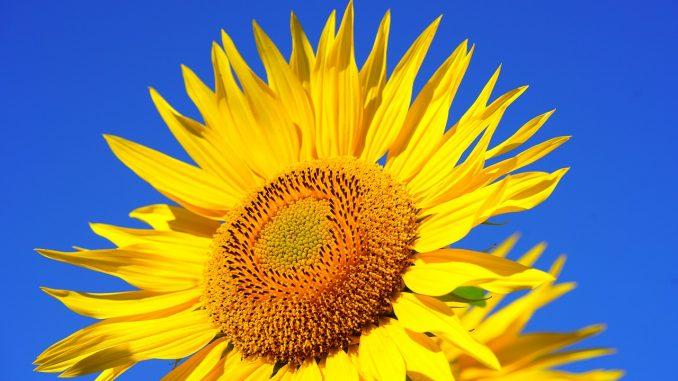 U Srbiji danas sunčano i toplo vreme, najviša temperatura 31 stepen 1