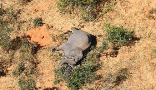 Zimbabve istražuje misterioznu smrt 11 slonova 6