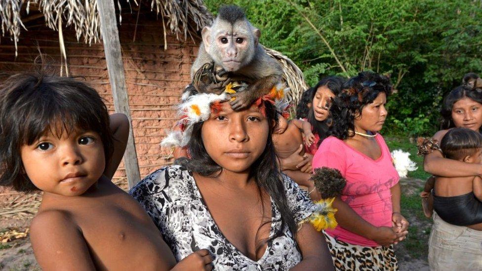Izolovana plemena su neotporna na mnoge viruse i bakterije