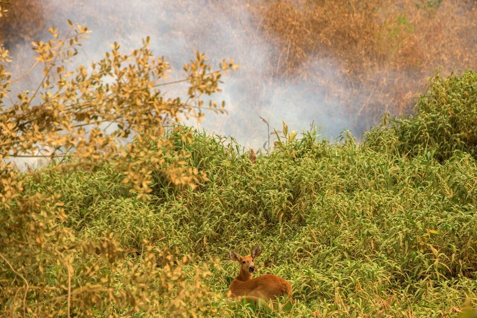 A deer looks startled in the undergrowth as it's surrounded by smoke