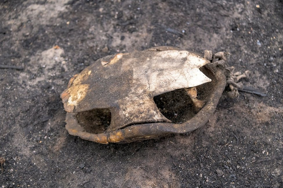 An empty burnt out turtle shell