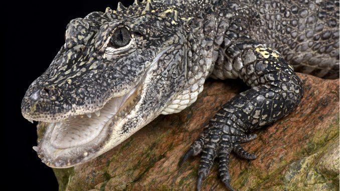 Bizarne Nobelove nagrade: Aligator pod gasom, nož za izmet, obrve pokazuju ko je narcis 3