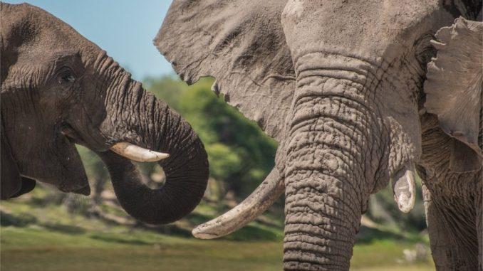 Smrt, životinje i Afrika: Otrovi iz plavozelenih algi krivi za pomor više od 300 slonova 3