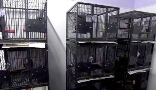 Papagaji koji psuju: Nekulturni papagaji uklonjeni iz parka 4