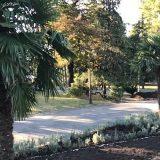 Hoće li palme na Kalemegdanu dočekati proleće? (VIDEO) 2