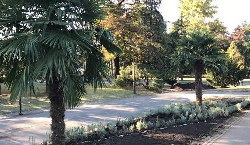 Hoće li palme na Kalemegdanu dočekati proleće? (VIDEO) 15