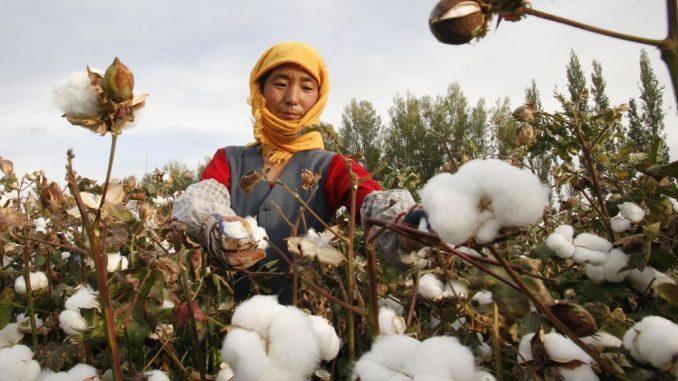SAD blokirale uvoz pamuka iz kineske oblasti Sindjang kao proizvod prinudnog rada 3