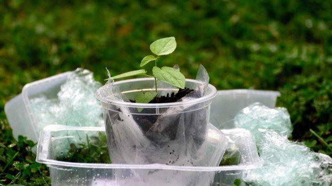 Nanoplastika čak i u biljkama 5