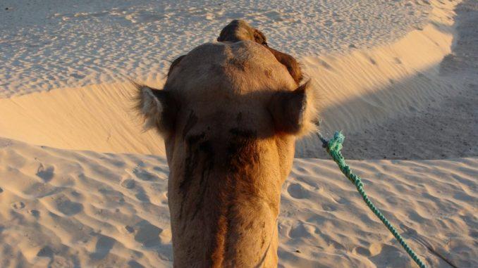 Toplotni talasi - opasnost koja se u Africi ne registruje 5