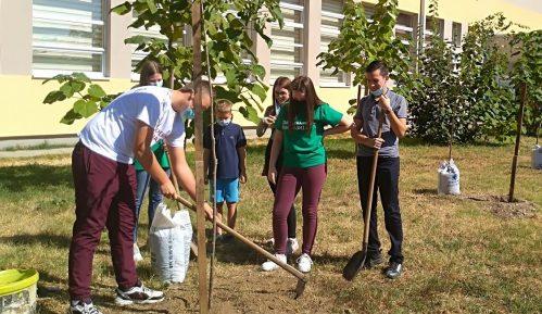 Umesto proslave, đaci zasadili drveće 9