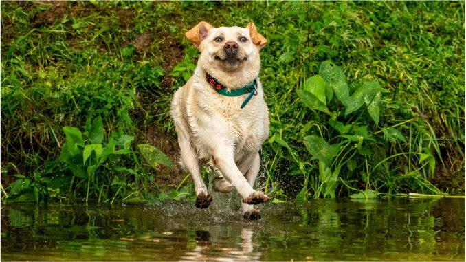 Smešne životinje: Urnebesne fotografije ljubimaca koji rade najsmešnije stvari 2
