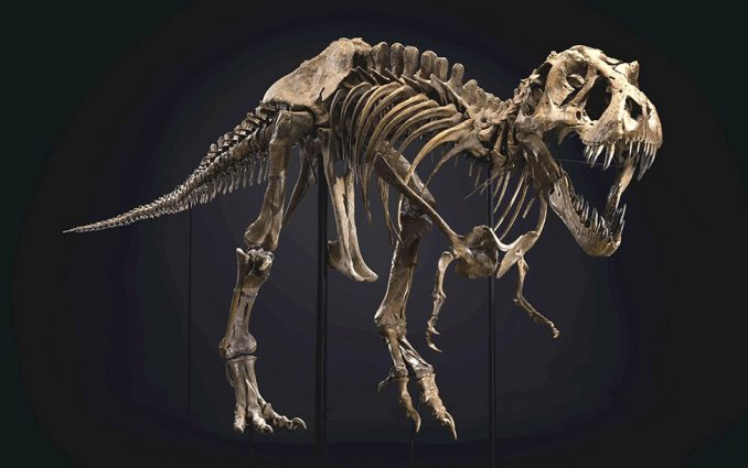 Dinosaurusi i praistorija: Fosil tiranosaurusa reksa prodat za skoro 32 miliona dolara 3