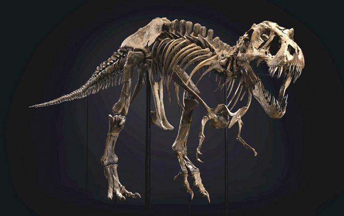 Dinosaurusi i praistorija: Fosil Tiranosaurusa reksa prodat za blizu 32 miliona dolara 4