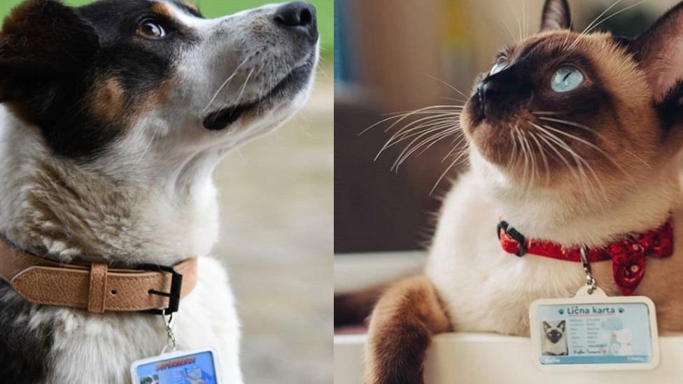 pas, mačka