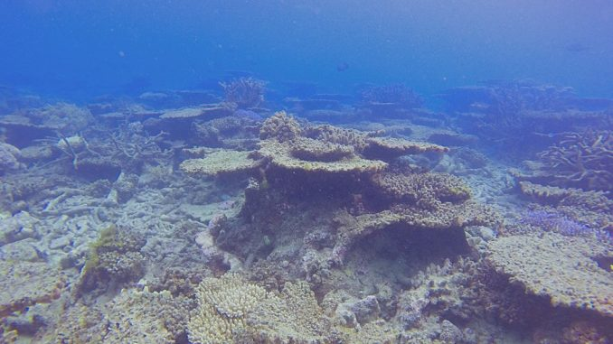 Klimatske promene i okeani: Veliki koralni greben u Australiji ostao bez polovine korala 2
