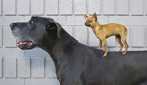 Čovek i pas - prijateljstvo koje traje 11.000 godina 19