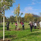 Aktivisti u Banatu posadili 190 stabala oko hrasta samotnjaka 10