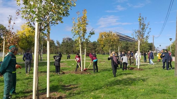 Drvo prijateljstva: Beograd bogatiji za 30 sadnica drveća 2