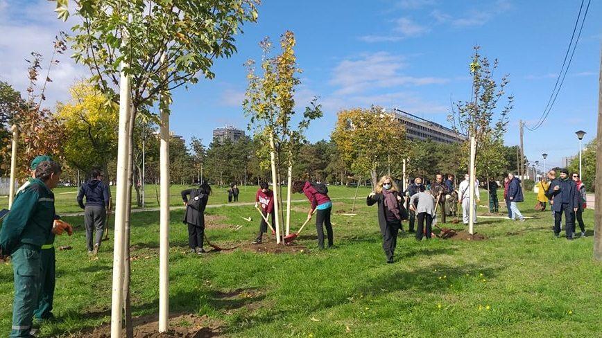 Aktivisti u Banatu posadili 190 stabala oko hrasta samotnjaka 1