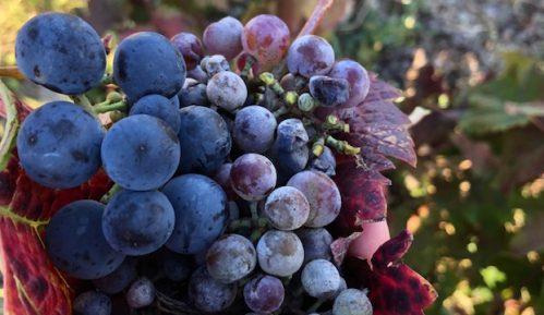 Unija poslodavaca Srbije zadovoljna ograničenjem maksimalnog uvoza vina po uvozniku 1