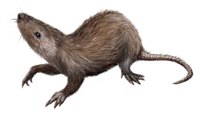 """Pronađena """"karika koja nedostaje"""" u evoluciji ušiju sisara 2"""
