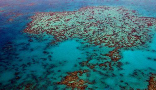 Polovina korala u australijskom Velikom grebenu uništena u poslednjih 25 godina 14