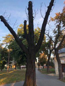 Ne davimo Beograd: Spisak 300 lokacija u Beogradu sa osušenim stablima predat nadležnima 2