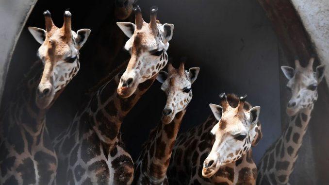 Životinje: Fascinantni načini na koje različite vrste vide brojeve i kako im to pomaže da prežive 3