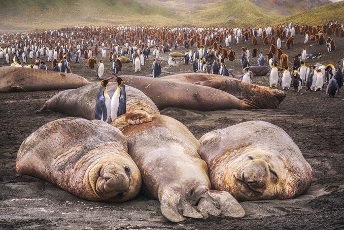 Antarktik i životinje: Najveća santa leda na svetu na putu je da se sudari sa kolonijom foka i pingvina 3