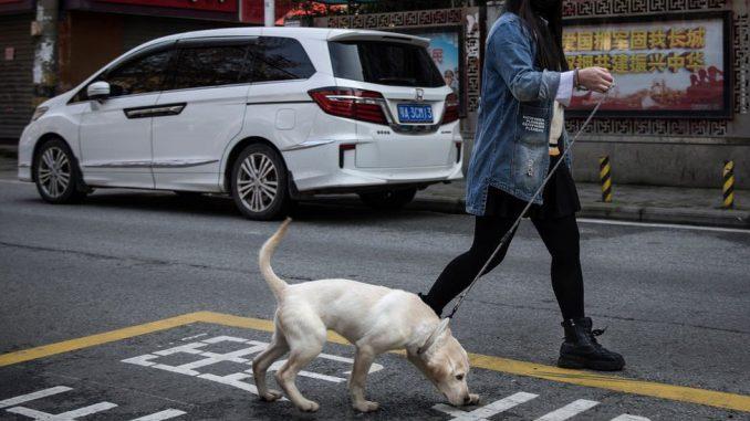Kina, psi i kazne: Ako šetate psa u Kini, to ga može koštati života 2