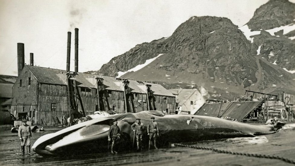 Norwegian whalers at Grytviken whaling station, South Georgia, 1932.