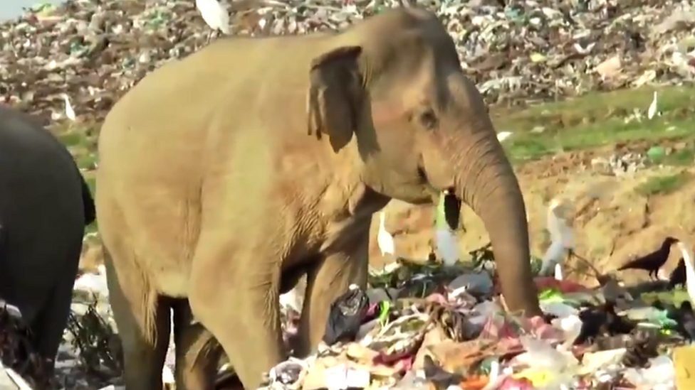 An elephant rummaging around for food at a landfill site