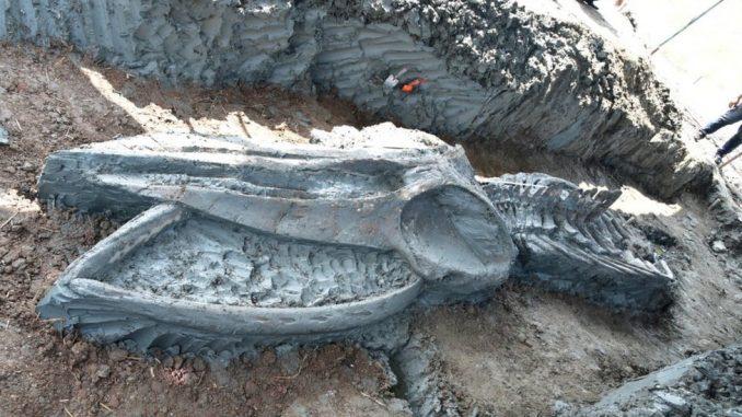 Arheologija i Tajland: Skelet retke i drevne vrste kita otkriven blizu obale 1
