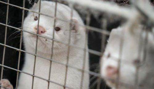 Posle kuna u Danskoj ubijaju i mačke pozitivne na korona virus 4