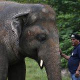 Pevačica Šer u Pakistanu prati najusamljenijeg slona na svetu u novi dom 15