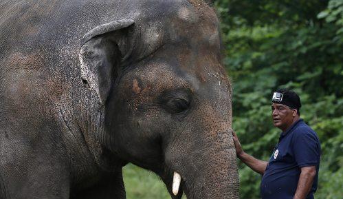 Pevačica Šer u Pakistanu prati najusamljenijeg slona na svetu u novi dom 1