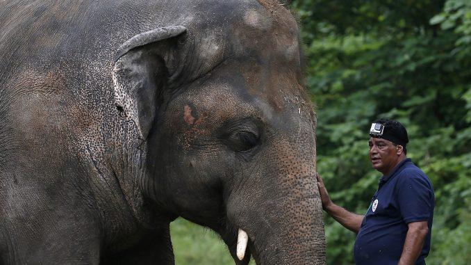 Pevačica Šer u Pakistanu prati najusamljenijeg slona na svetu u novi dom 2
