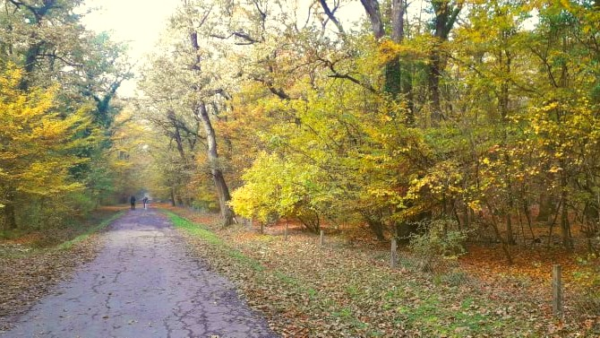 Građani sprečili seču stabala u šumi kod gradskog groblja u Čačku 1
