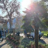 Na Kalemegdanu počela zaštita palmi za zimu (FOTO; VIDEO) 3