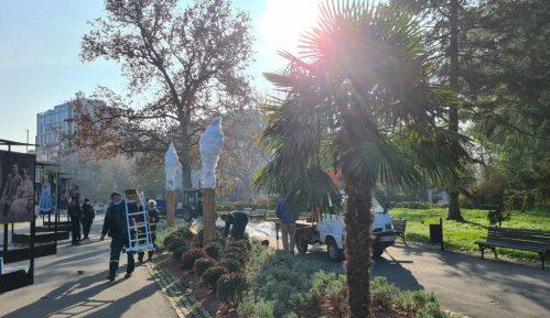 Na Kalemegdanu počela zaštita palmi za zimu (FOTO; VIDEO) 1