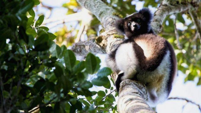 Očuvanje prirode: Ograničimo ljudski uticaj na prirodu da bi sprečili njeno propadanje, kažu UN 7