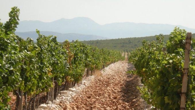 Bosna i Hercegovina: Vino sa odsjajem Neretve 4