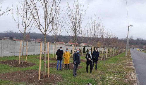 Nastavak zaštite životne sredine formiranja drvoreda u Kostolcu 10