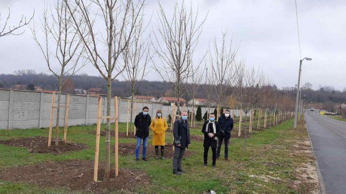 Nastavak zaštite životne sredine formiranja drvoreda u Kostolcu 6