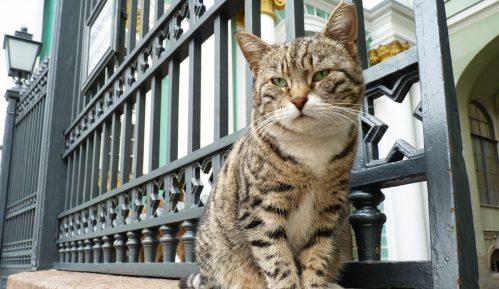 Mačke Ermitaža od francuskog lekara nasledile 3.000 evra 2