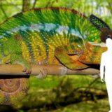 Novi muzej u Beogradu pokazaće nam svet iz ugla životinja 12