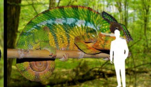 Novi muzej u Beogradu pokazaće nam svet iz ugla životinja 2