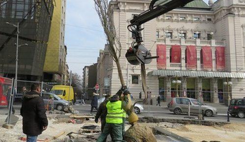 Zelenilo: Zamena stabala na Trgu Republike u Beogradu 1