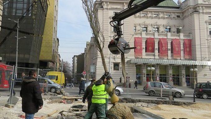Zelenilo: Zamena stabala na Trgu Republike u Beogradu 8