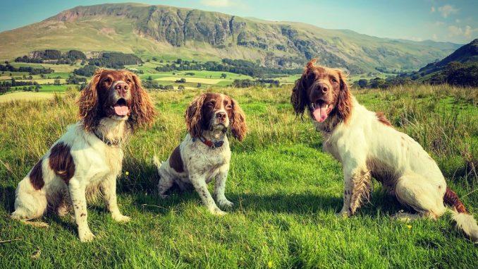 Kućni ljubimci: Šetnja sa psom u prirodi - lek za tmurnu svakodnevicu 6
